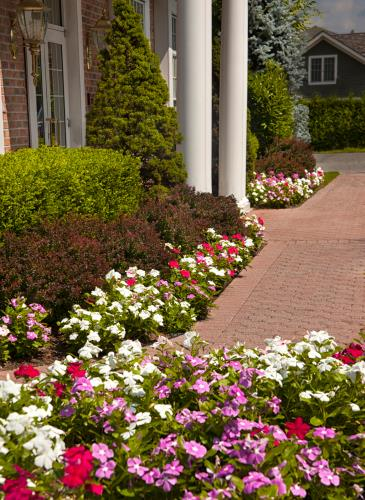 Garden Care and Displays
