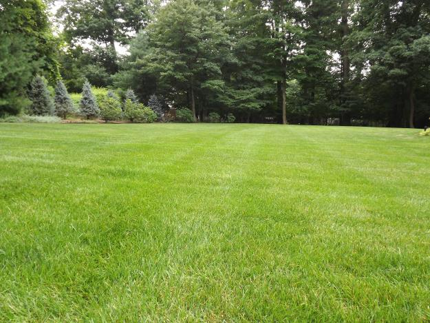 Landscaping Tips for the Perfect Lawn