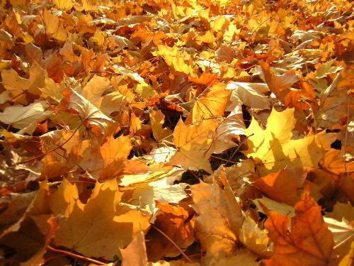 Leaf Removal in Bergen County and Northern New Jersey