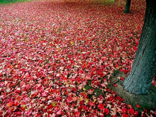 {#/pub/images/red_autumn_leaves.jpg}