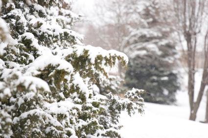 {#/pub/images/winter_treess600x600.jpg}