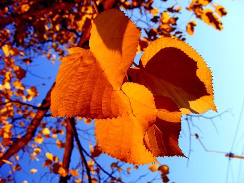 {#/pub/images/ws_Autumn_leaves_1600x1200.jpg}
